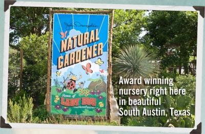 January Gardening Tips From Southwest Austin S Natural Gardener