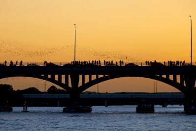 Bats head out from the Congress Avenue bridge for a night on the town