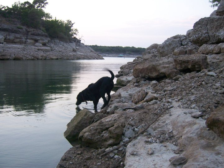 dog parks in austin texas